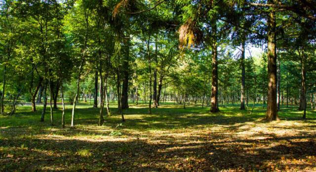 Ikea acquista 4.000 ettari di foresta per proteggerla e gestirla in modo sostenibile