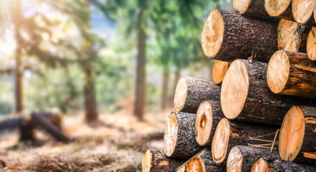 Coltivare legno in laboratorio per frenare la deforestazione