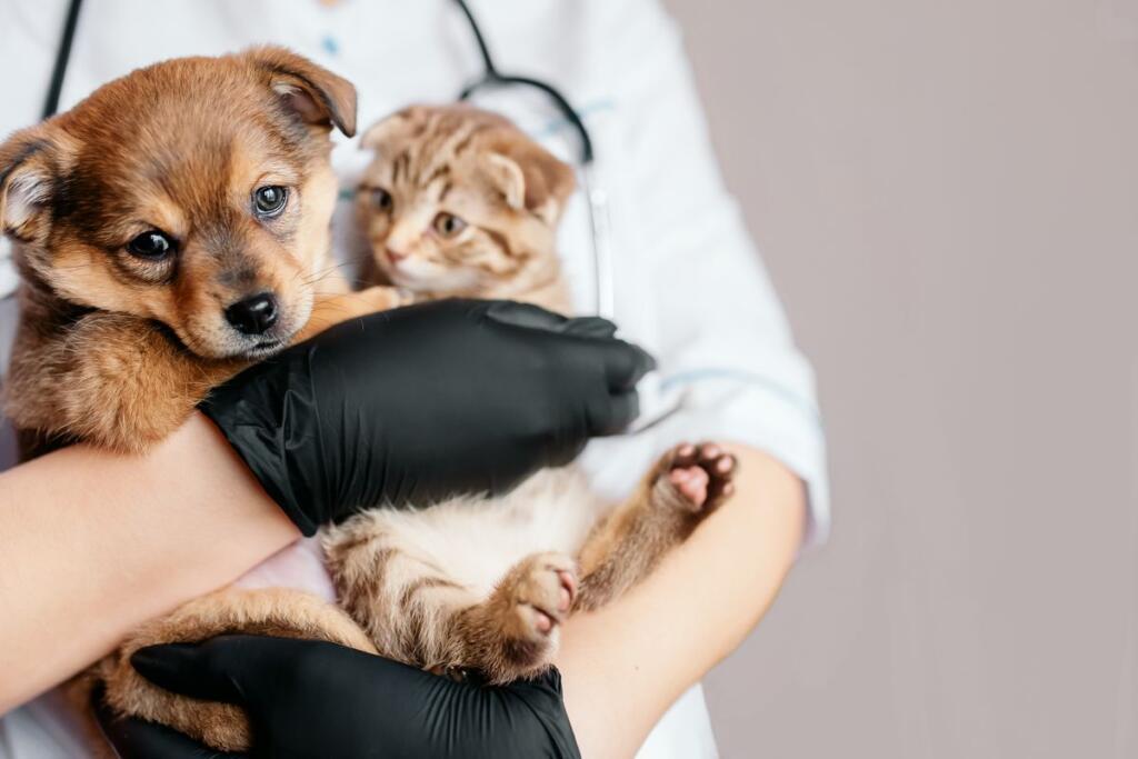 Un veterinario con cuccioli di cane e gatto