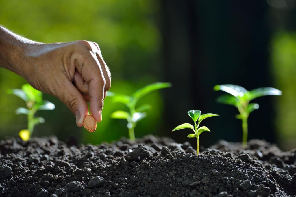 Un uomo pianta un seme