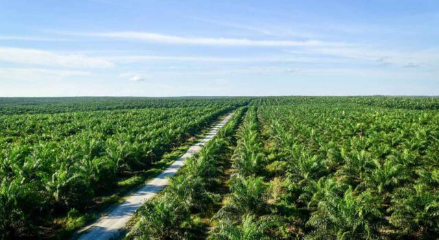 Sri Lanka: stop alle piantagioni di olio di palma e all'esportazione