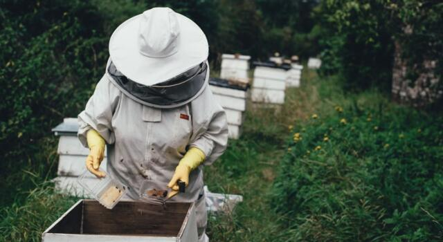 Adotta un alveare e scegli api e biodiversità