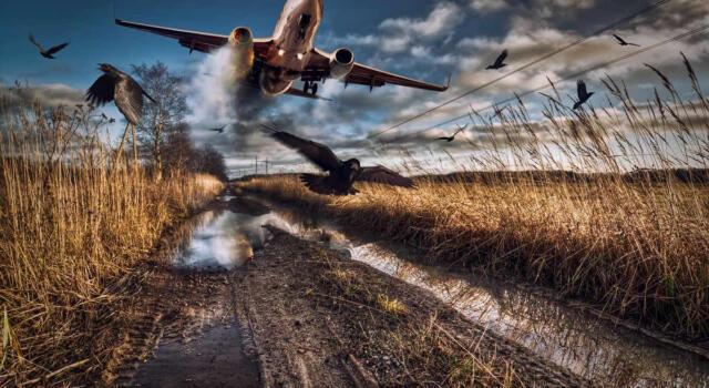Covid, diminuiscono i voli aerei e gli animali 'salvati' aumentano: i dati