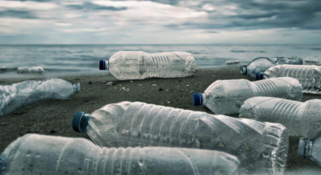 Bari, spiagge pulite in estate grazie ai pesci mangia plastica