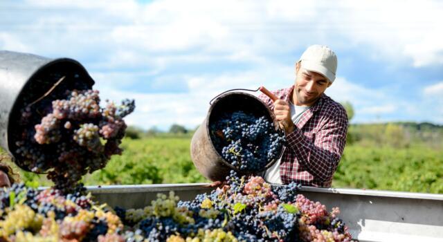 L'Italia è ancora leader nel mondo nella produzione di vino